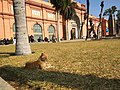 Egyptian Museum and cat 1.jpg