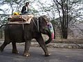 Elephant! (4189259118).jpg