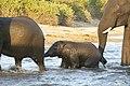 Elephant (29755550358).jpg