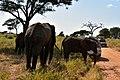 Elephants, Tarangire National Park (30) (28592788662).jpg