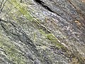 Epidote in gneiss (Precambrian; Rt. 93 roadcut next to the New River, Mouth of Wilson, Virginia, USA) 2 (30889156482).jpg