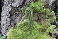 Epiphyte (8188168274).jpg