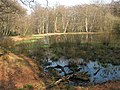 Epping Forest, Blackweir Pond - geograph.org.uk - 1214326.jpg