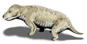 Ladinian - Exaeretodon