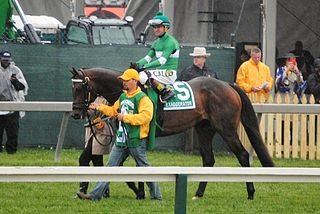 Exaggerator American-bred Thoroughbred racehorse