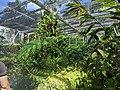 Exotic Plants.jpg