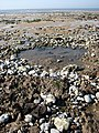 Exposed foreshore - geograph.org.uk - 794856.jpg