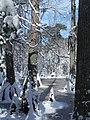 FL Swamp covered in Snow (5304120952).jpg