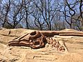 Fake dinosaur fossil in Dalian China 6.jpeg