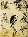 Falconry, the sport of kings (1920) (14752451815).jpg