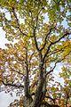 Fall foliage (30375784946).jpg