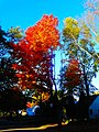 Fall in Madison - panoramio (10).jpg