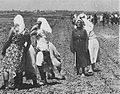 Farmhands gather beets.jpg