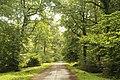 Faux de Verzy, forest trail.JPG