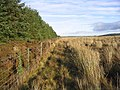 Field-woodland boundary - geograph.org.uk - 294290.jpg