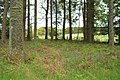 Field Amongst the Woods - geograph.org.uk - 436816.jpg