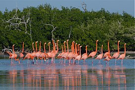 Flamingoes at Ría Lagartos.jpg