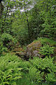 Flickr - Rainbirder - A green glade in Glen Lochay, Breadalbane.jpg