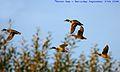 Flickr - law keven - Flying tonight....jpg