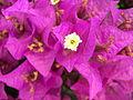 Flor desconocida 2489.jpg