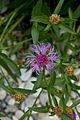 Flora (1) - Isarauen München.jpg