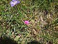 Flores violetas.JPG