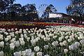 Floriade Canberra 2015 2.JPG