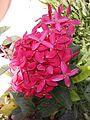 Flower1110.jpg