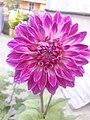 Flower20180527 184430.jpg