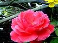Flower 174520.jpg
