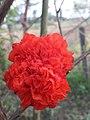 Flower 20181007 171832.jpg