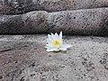 Flower blossom 19.4.jpg