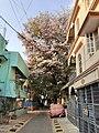 Flower tree (1), Hosakerehalli, Bangalore.jpg