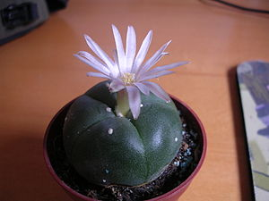 American Indian Religious Freedom Act - Peyote is illegal in the United States and is classified as a Schedule One Drug.
