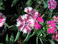 Flowers (70).JPG