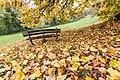 Foglie gialle a Parco S. Pellegrino.jpg