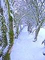 Footpath from Grane Road - geograph.org.uk - 1633278.jpg