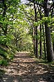 Footpath in Stawardpele Wood - geograph.org.uk - 408166.jpg