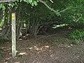 Footpath junction in Mainey Wood - geograph.org.uk - 1428033.jpg