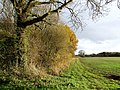 Footpath to Orby - geograph.org.uk - 620276.jpg