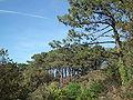 Forêt de Suzac (6).JPG