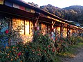Forest Camp .. The way to Maardi Himal.jpg