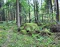 Forest in Jyväskylä.jpg
