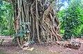Forest of Abomey-Benin.jpg