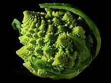 Fractal Broccoli.jpg