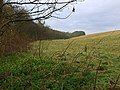 Furrows Plantation - geograph.org.uk - 761346.jpg