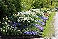 Göteborgs botaniska trädgård-IMG 6538.JPG