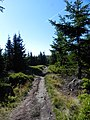 Główny Szlak Sudecki - panoramio (18).jpg