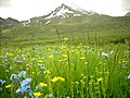 GB Deosai National Park -2.jpg
