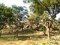 GOVERDHAN DHAM - panoramio.jpg